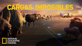 Cargas Imposibles