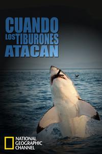Cuando los tiburones atacan